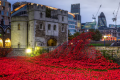 Wearing the poppy has always been a political act – here's why
