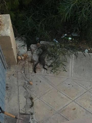 A dead cat can be seen in this photo an alleged eyewitness posted to Facebook. Photo: Facebook