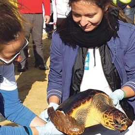 One of the two loggerhead turtles released during the launch event at Golden Bay.
