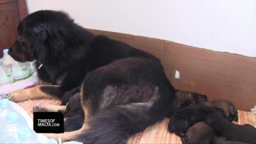 'Million dollar dog' bred here in Malta