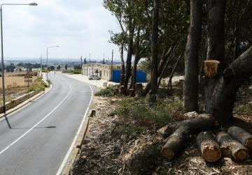 Diseased trees along Mtarfa Hill cut down