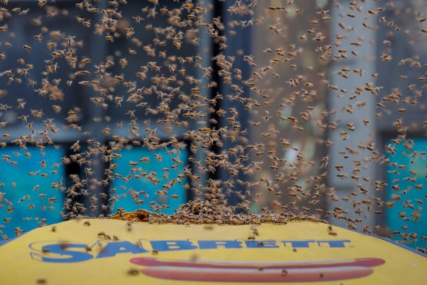 Bees swarmed the stand. Photo: Reuters