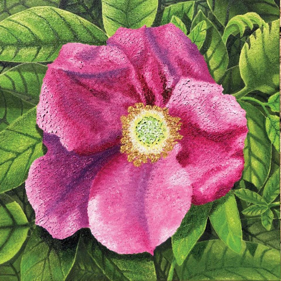 Dünenröschen (Beach Flower), oil on canvas, by Wibke Seifert