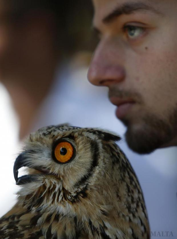 An Eagle Owl rests next to its handler during the agricultural festival of L-Imnarja in Buskett on June 29. L-Imnarja, also known as the feast of St. Peter and St. Paul, is the most important date in the Maltese folklore diary. Photo: Darrin Zammit Lupi
