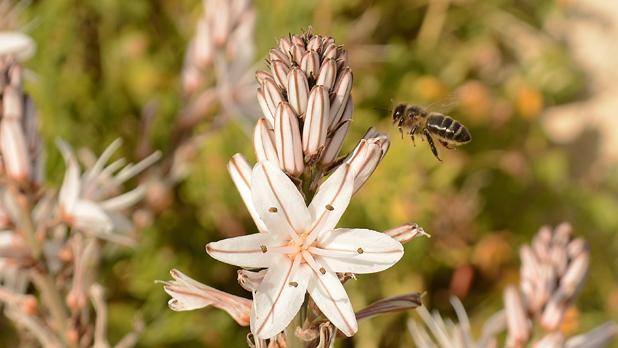 Bee. Photo: Martin Seychell