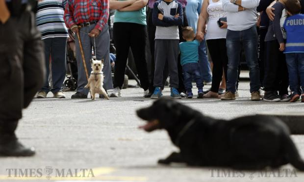 A man's dog reacts as it watches a police dog during a demonstration at an event organised by the Zejtun local council for youngsters to educate them about roadside safety and traffic flows, in Zejtun on April 23. Photo: Darrin Zammit Lupi