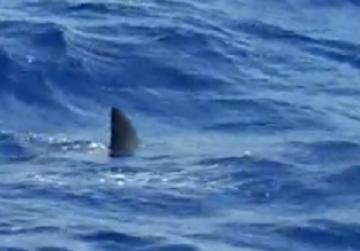 'Shark' spotted off breakwater