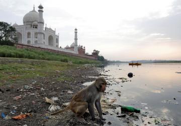 Monkey kills 12-day-old Indian baby