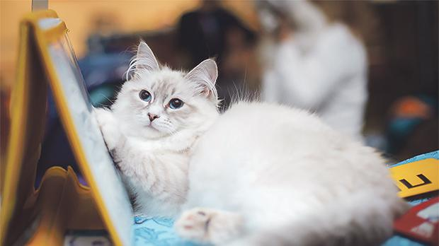 Applications to participate in the cat show being held next weekend close today.