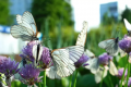 Save bees and butterflies to save urban life