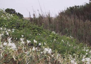 Flora at Golden Bay
