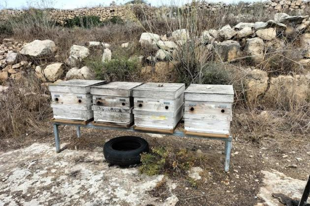 1.5m bees burned alive in likely arson in Gozo