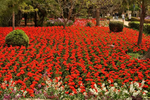 A flower bed in bloom at San Anton Garden on April 11. Photo: Chris Sant Fournier