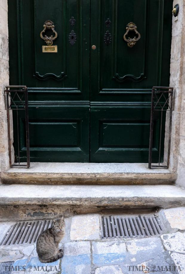 A cat patiently waits outside a front door in St Paul Street, Valletta on January 20. Photo: Matthew Mirabelli