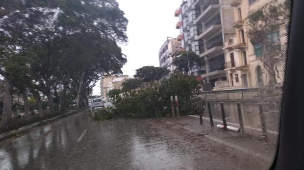 A collapsed tree blocks a traffic lane in Pieta'.