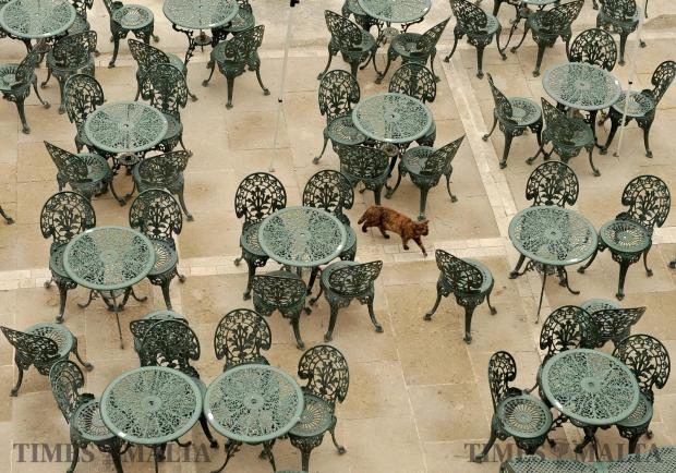 A cat strolls through tables and chairs at a cafeteria in Valletta on May 17. Photo: Chris Sant Fournier