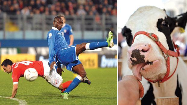 Malta's Gareth Sciberras and Italy's Mario Balotelli go down after a hard challenge during their 2014 World Cup qualifying soccer match at the National Stadium in Ta' Qali. Right: A cow licks a man's hand during the Milk Festival in Għargħur. Photos: Matthew Mirabelli