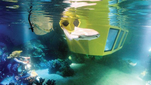 Sharks And Rays Move In To Legoland