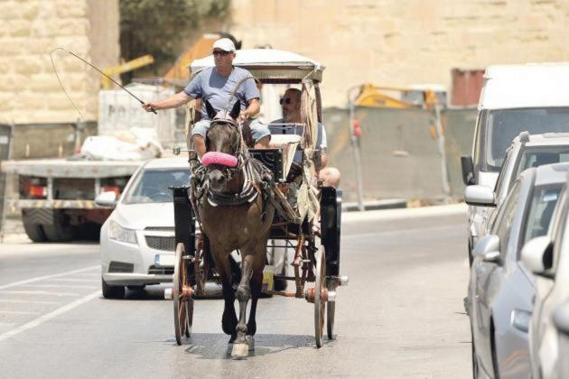 Karozzini horses banned in hot summer afternoons