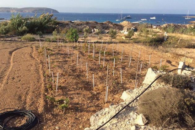 Man who turned a Mellieħa dump site into a garden told he is squatting