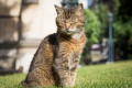 London Cathedral cat immortalised in stone