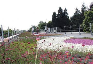 Green roof at Fondazione Minoprio (project partner).