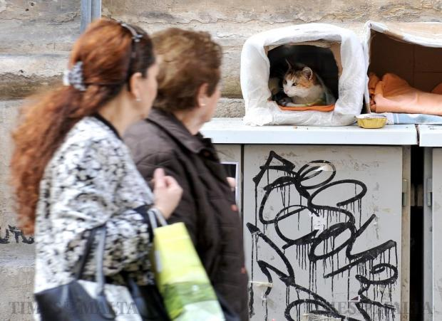Passers-by look at a cat in a box in Melita Street in Valletta on March 7. Photo: Chris Sant Fournier