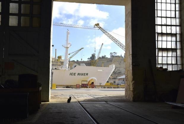 A cat looks towards a boat berthed at the Palumbo Shipyard in Cottonera on December 2. Photo: Mark Zammit Cordina
