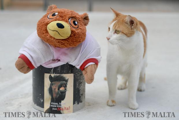 A cat poses next to a teddy bear at the Cat Village in Spinola on November 29. Photo: Matthew Mirabelli