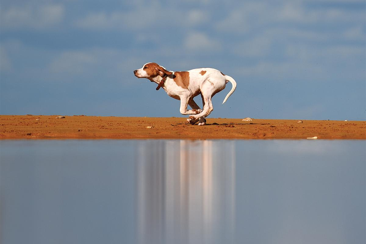 A dog runs free at Ramla l-ħamra. What lifts this image from the ordinary is the minimal composition and the shimmer caused by the dog's reflection on the water. This image was shot on December 4, 2020. Photo: Chris Sant Fournier
