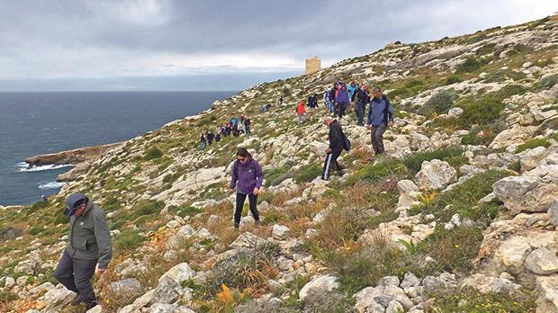 Garigue around Żurrieq area.