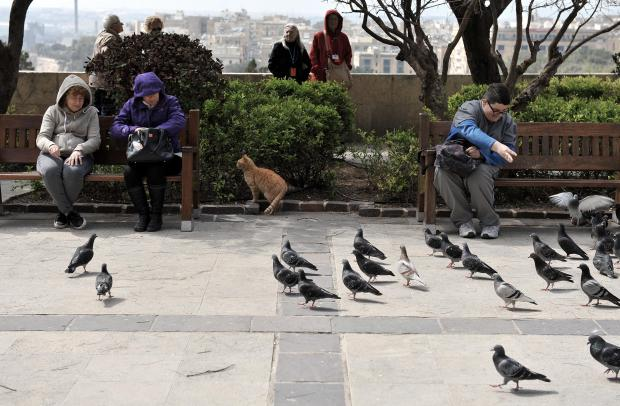 Pigeons gather to eat crumbs at the Upper Barrakka Gardens on March 16. Photo: Chris Sant Fournier