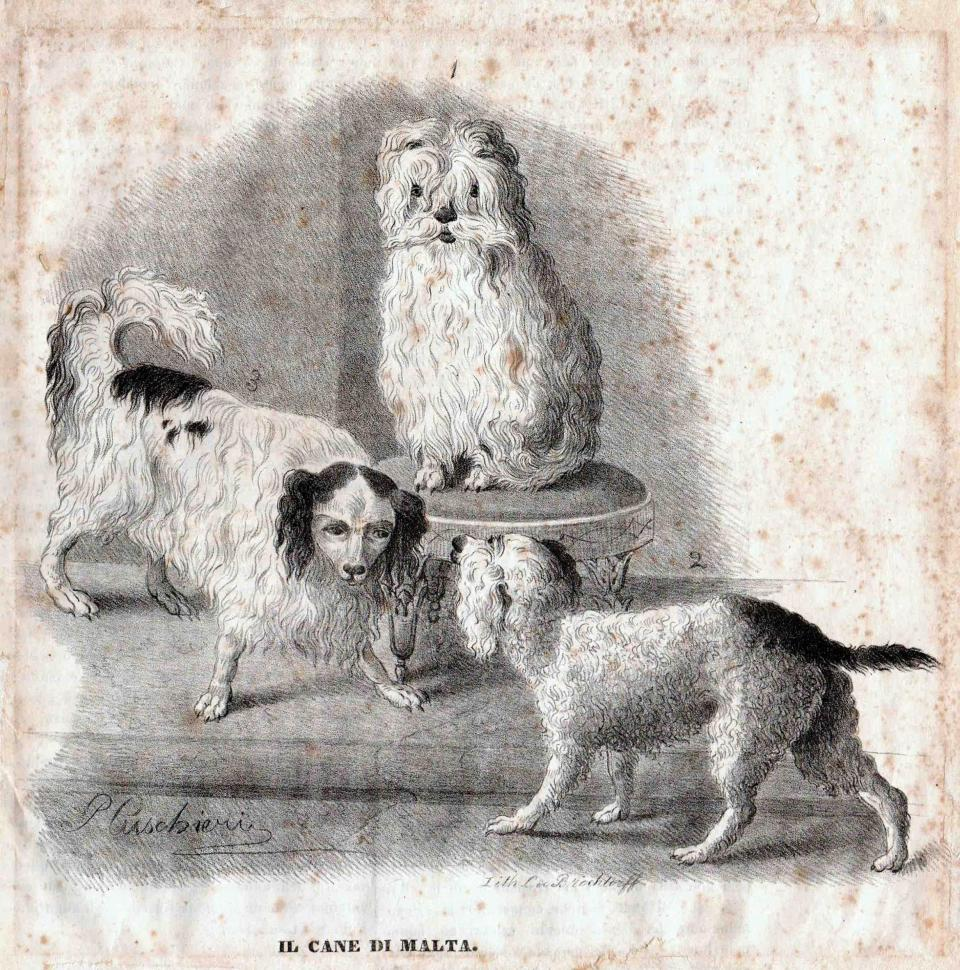 Il Cane di Malta, lithograph signed by C. de Brochtorff (sic), 1843