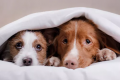 How to keep your pet happy during thunderstorms - and fireworks