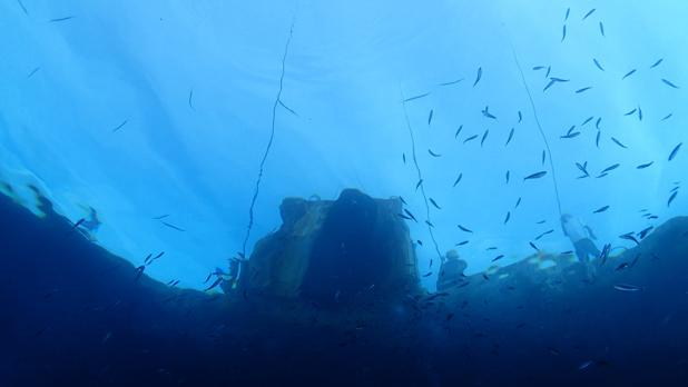 Fishermen as seen from underwater at South Quay, Ċirkewwa. Photo: David Agius