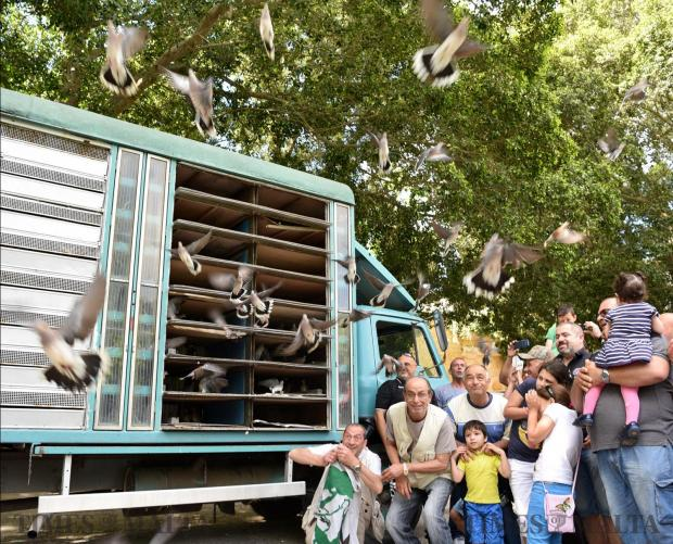 Hunters crouch to make way for the release of around four hundred turtledoves in Busket on May 21. Photo: Mark Zammit Cordina