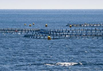 'We cooperated fully with Spain over tuna scandal' - police
