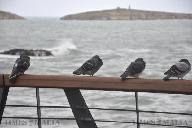 Pigeons rest on railings in St Pauls Bay during a storm on December 18. Photo: Mark Zammit Cordina