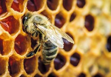 Bees could pass on the chemicals in pesticides and insecticides to the honey. Photo: Shutterstock