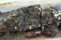 56-million year old sub-tropical coastline found in London
