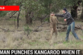Watch: Punches kangaroo in the face to save dog