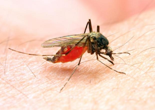 Girl, 4, dies from malaria in northern Italy