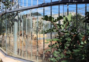 Tiger seriously injures boy, 3, at Ħal-Farrug zoo