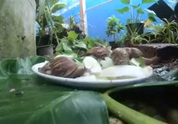Thai farmers keep snails 'happy' for cosmetic slime