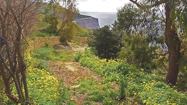 Woodland near Dingli Cliffs. Photos: Mary Attard