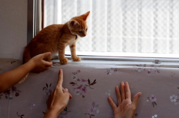 Passengers gesture, as a cat sits near a window, in a train cat cafe, held on a local train to bring awareness to the culling of stray cats, in Ogaki, Gifu Prefecture, Japan September 10, 2017. Photo: Reuters/Kim Kyung-Hoon