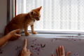 Japan railway lets 30 cats roam to raise awareness of strays