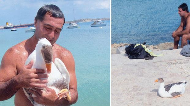 Left: Ivan Mizzi has managed to create such a strong bond with Gogo the goose that it refuses to fly away. Photo: Frank Attard