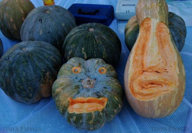 Two pumpkins carved into faces are displayed at the annual pumpkin festival held in Manikata on October 26. Photo: Mark Zammit Cordina