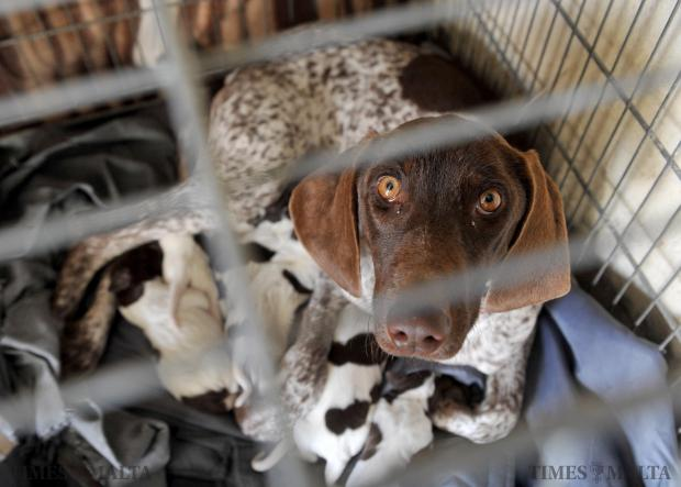 A Dog protects her puppies at the AAA facility in Luqa on December 2. Photo: Chris Sant Fournier